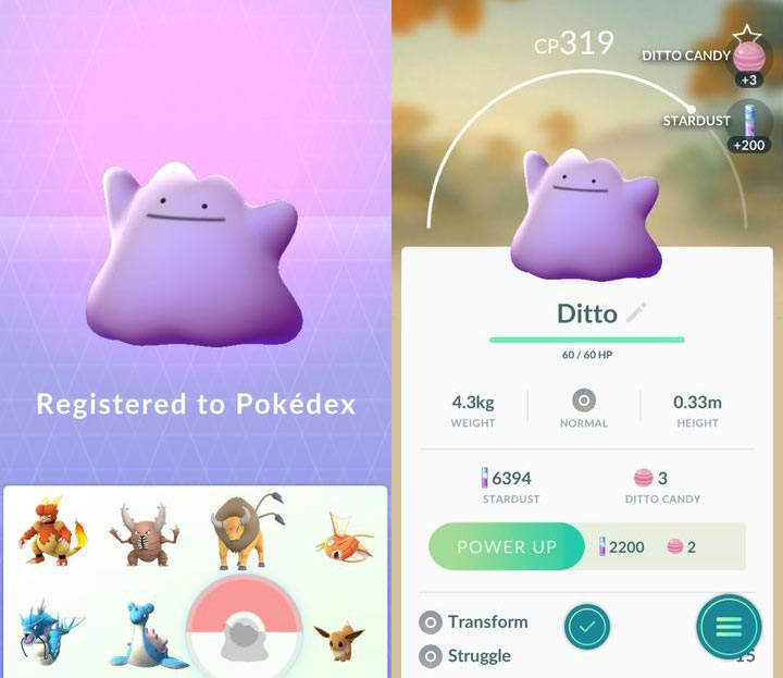 pokemon_ditto